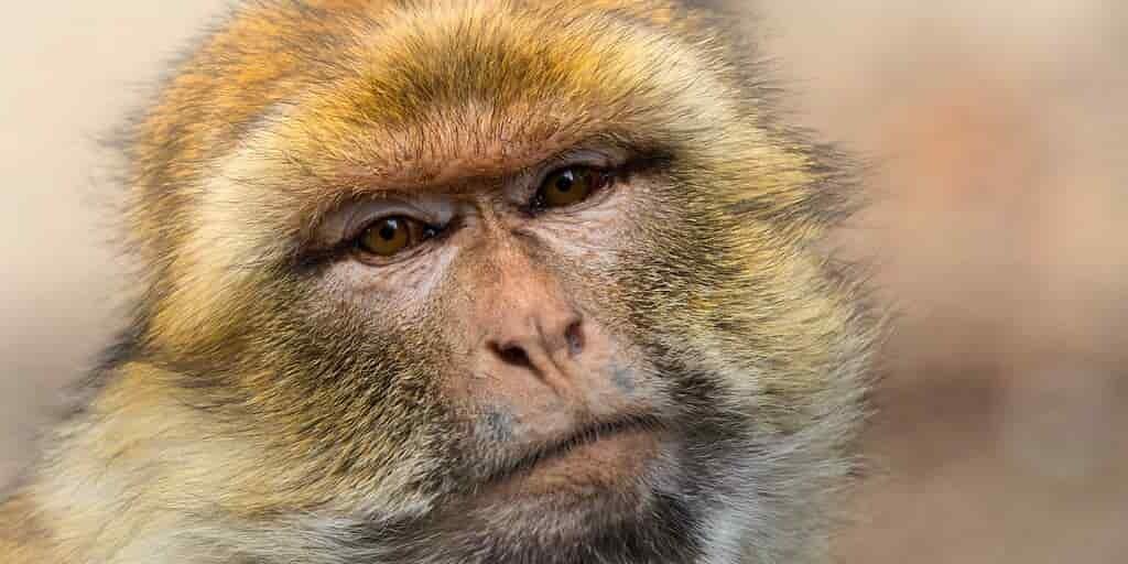 primates-animaux-plantes-extinction