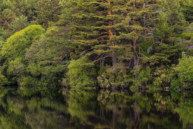 Reflections on the pond, Navacerrada, Madrid, Spain.