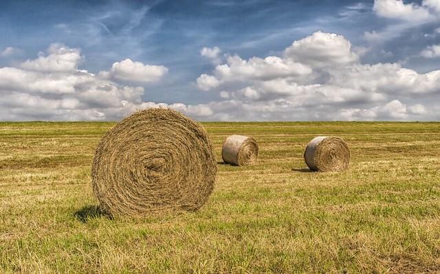 Bales of hay in West Virginia