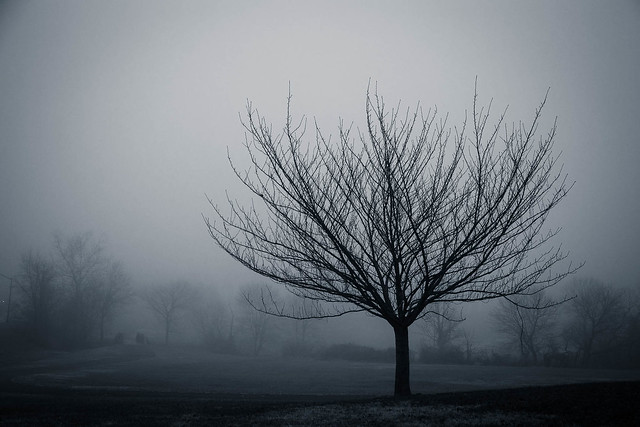 Tree on a Cold, Foggy Morning