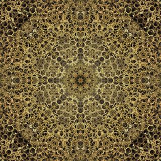 Abandoned Wasp Nest Kaleidoscope