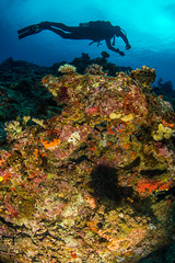 diver over coral-