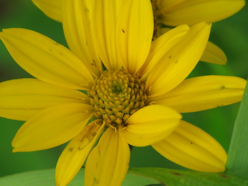 yellow flower portrait