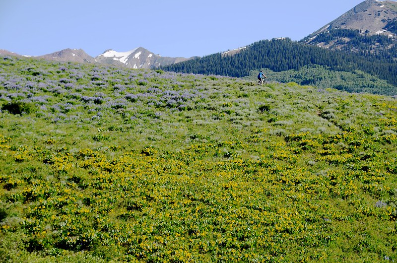 Teddy's Trail, Crested Butte (43)