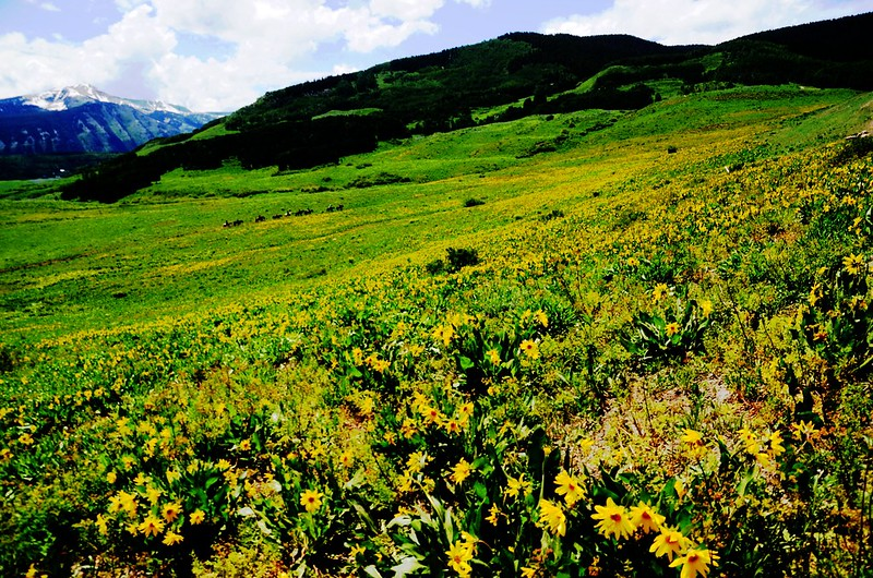 Teddy's Trail, Crested Butte (2)