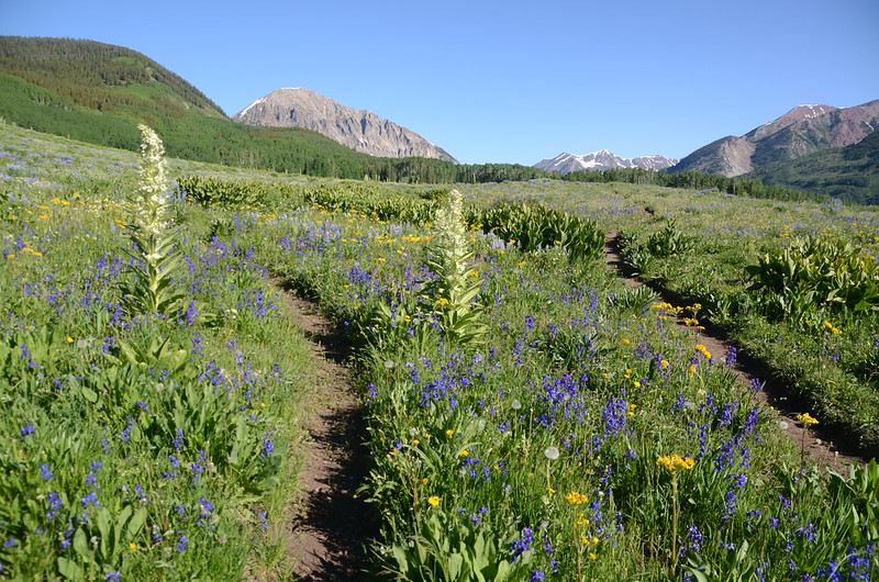 Teddy's Trail, Crested Butte (33)