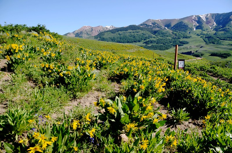 Teddy's Trail, Crested Butte (44)