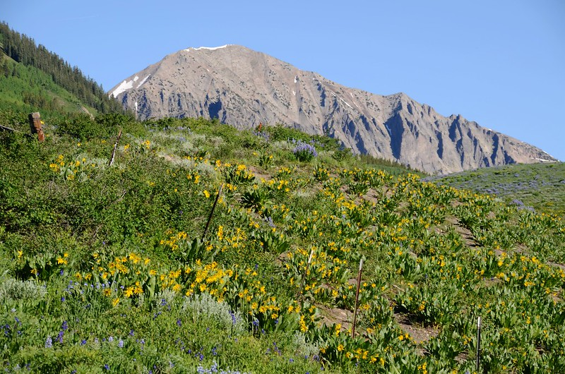 Teddy's Trail, Crested Butte (19)