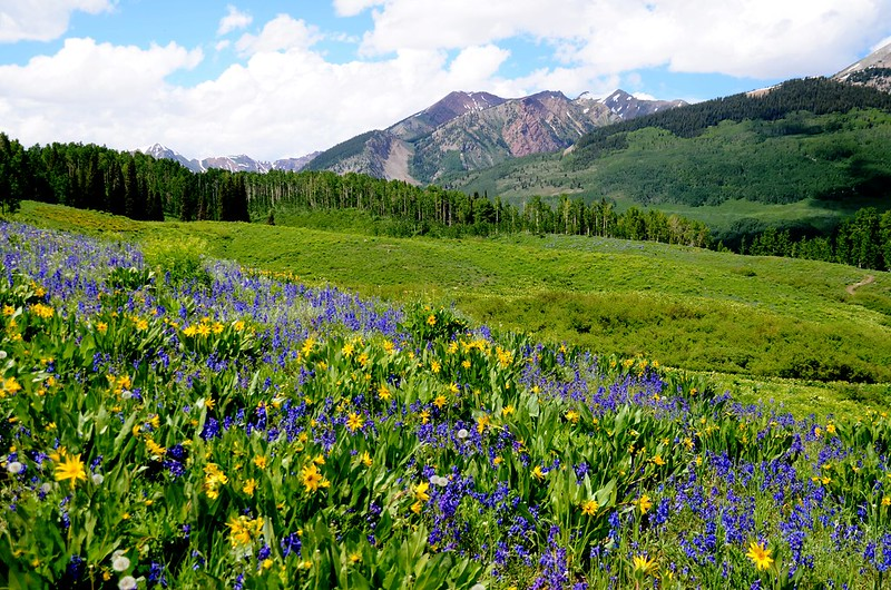 Teddy's Trail, Crested Butte (9)