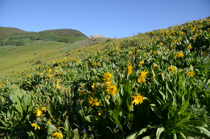 Teddy's Trail, Crested Butte (14)