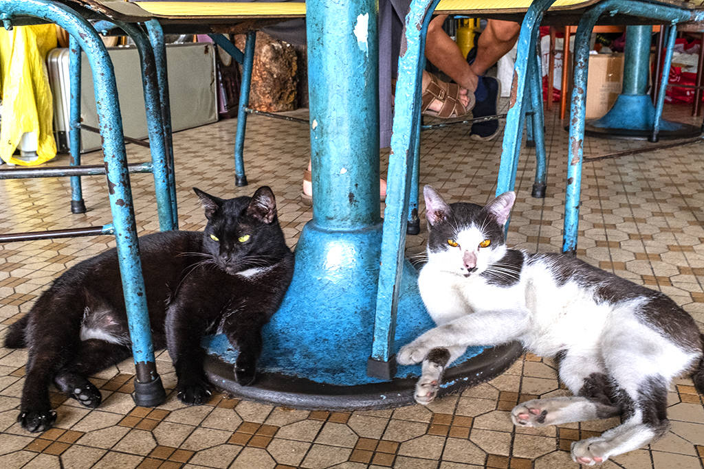Two cats under table in antique store--Taiping