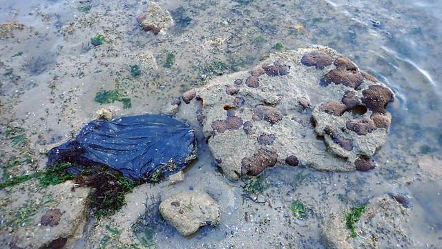 Trash smothering corals