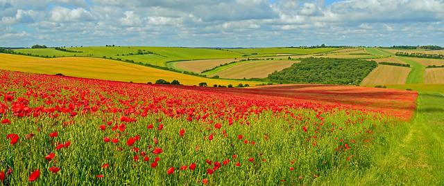 Overlooking the gallops, East Garston, Berkshire, England