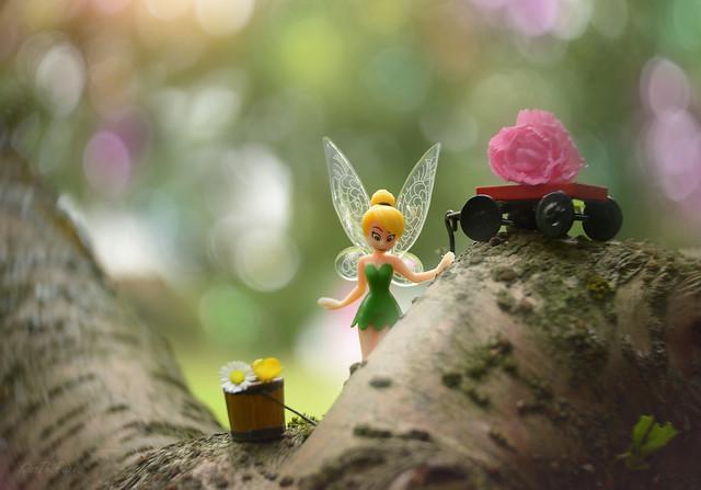 Fairy Tree...