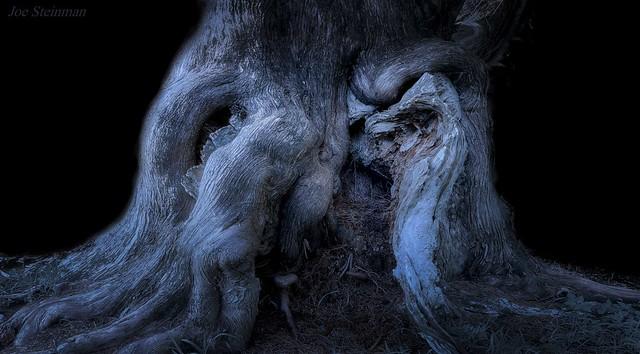 communion entre l'esprit des arbres et la nymphe de la forêt