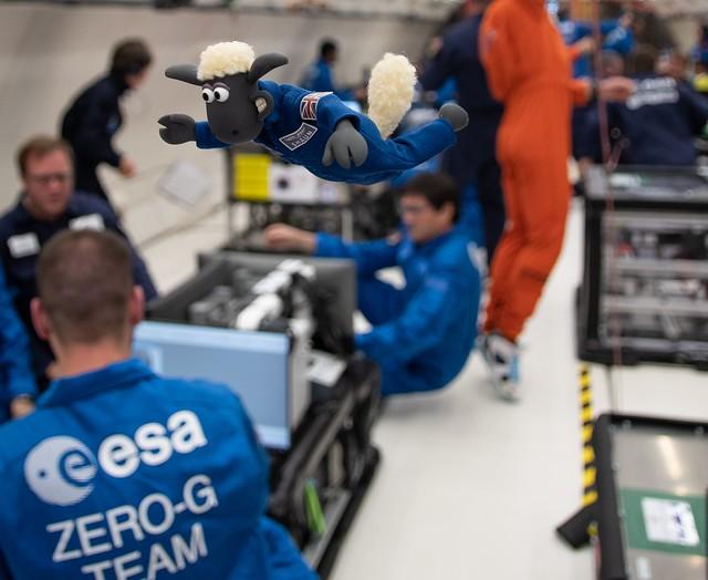 Shaun the Sheep experiencing microgravity on ESA parabolic flight