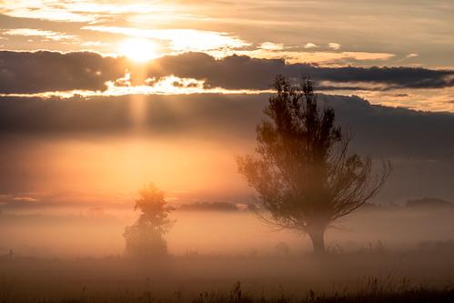 landscape nature poland morning sunrise dawn clouds mist fog tree trees