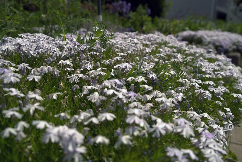 ven, 07/19/2019 - 09:32 - Le Vieux-Saint-Eustache en fleurs !