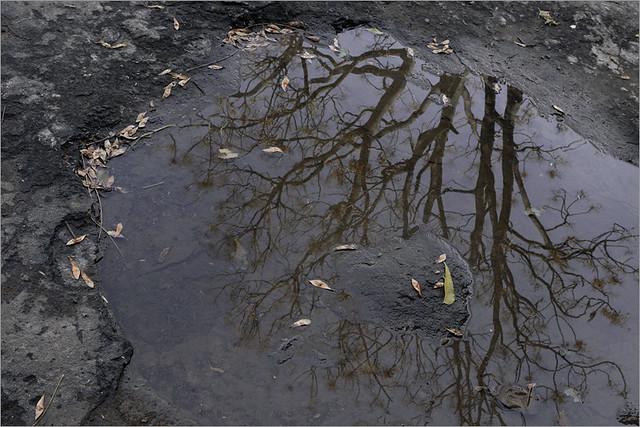 puddle ..