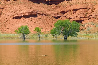 Red & Green Reflections_1455