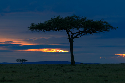 acacia acaciatree africa afrika dawn eastafrica gamedrive kenya landscape maasaimara maranorthconservancy mariostree narokcounty republicofkenya riftvalley safari silhouette sunrise tree