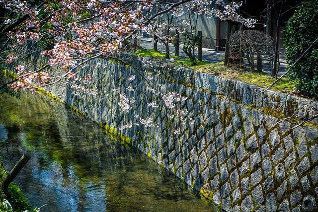 Philosopher's Walk - Kyoto, Japan