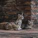 Cats - Wat Maheyong - Ayutthaya