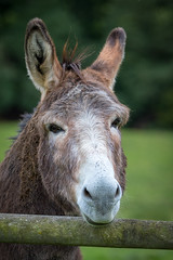 The Donkey with a fringe on top !