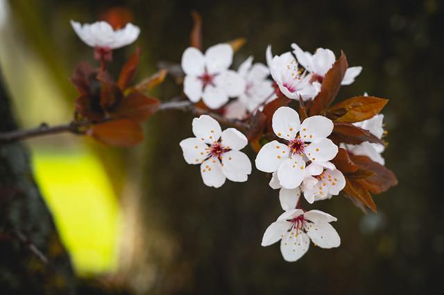 Frühlingserinnerung