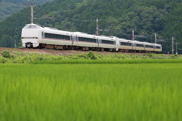 Beside the rice fields