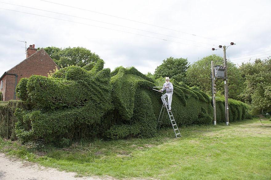 dragon-shaped-hedge-topiary-john-brooker-2
