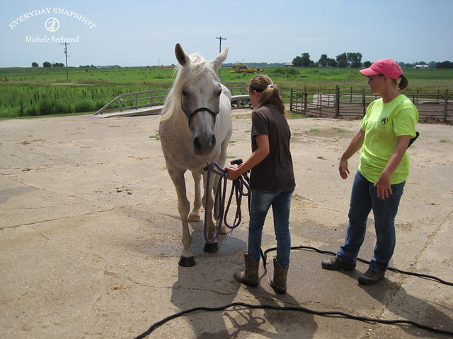 Horse Lessons 5 (4)