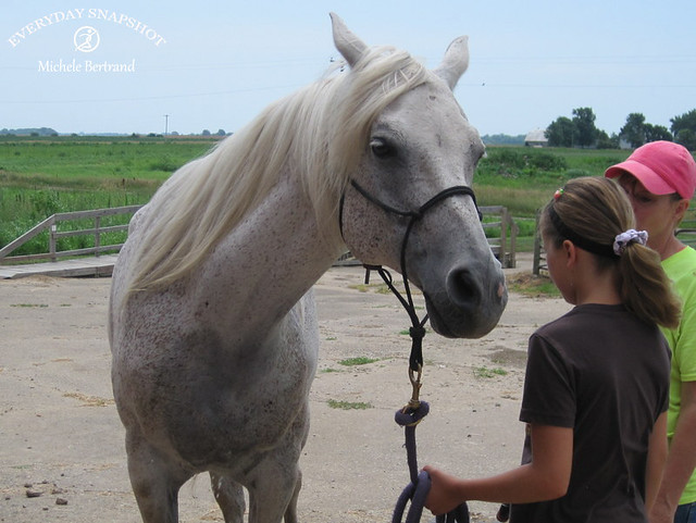 Horse Lessons 5 (5)