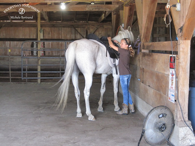 Horse Lessons 5 (3)