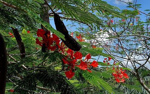 MEXIKO, Yucatán , Hacienda Sotuta de Peón, Sisalplantage , mit toller Flora, 19102/11763