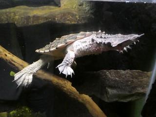 Columbus Zoo - Mata Mata
