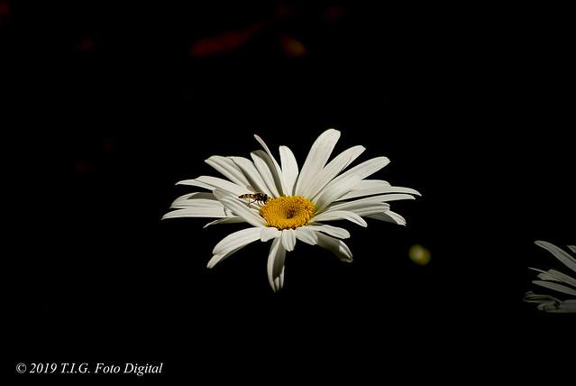Una flor preciosa en la oscuridad