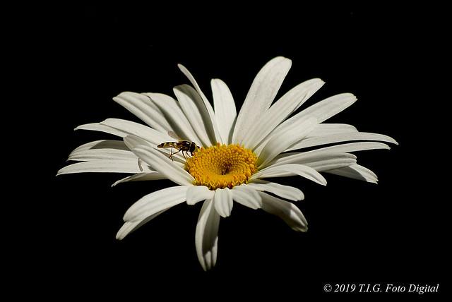 Una flor preciosa y elegante en la oscuridad
