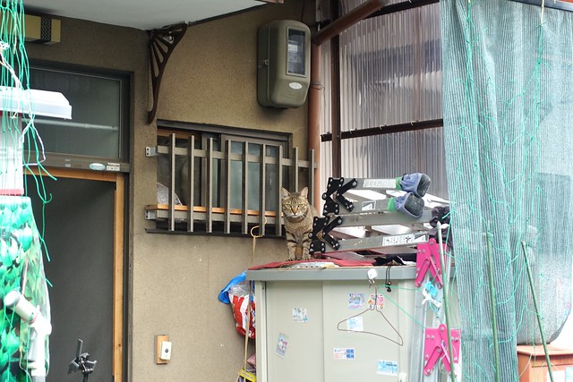 Today's Cat@2019-07-20