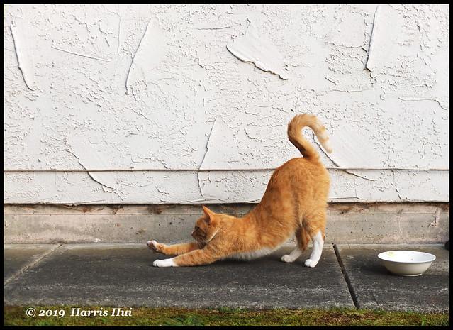 The J Stretch - Kitty Kitty X5378e