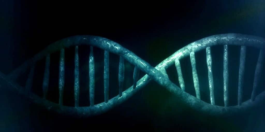 patrimoine0génétique-adn-transposons