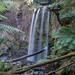 Hopetoun Falls - Beech Forest - Great Otway NP