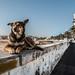 watchDog by Dr. Ernst Strasser