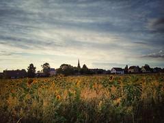Weidesheim