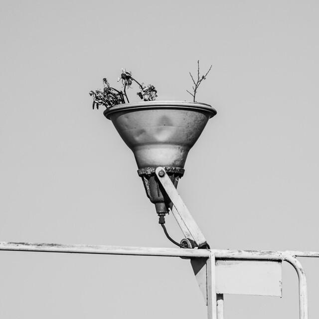 pot in the sky