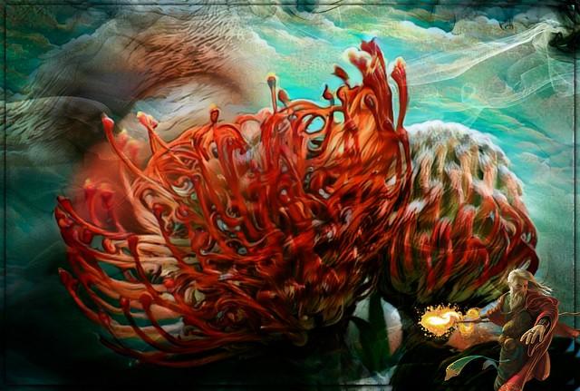 Flaming Proteas