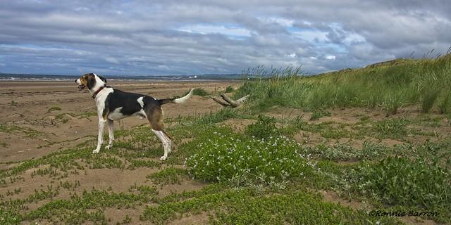 my dune buddy