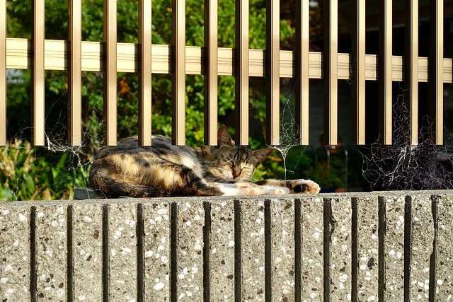 Today's Cat@2019-07-21