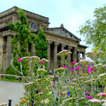 Summer flowers by the Harris Museum