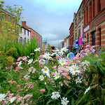 Summer flowers down Friargate, Preston